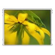 友达 15寸LCD(M150XN07 V2)产品图片主图
